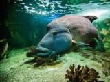 copie-de-aquarium-vannes-golfe-du-morbihan-76