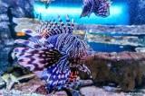 fototribe-aquarium-vannes-4-78