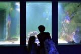 hd-aquarium-vannes-27-79