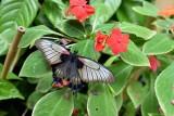 hd-jardin-papillons-12-84