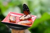 hd-jardin-papillons-24-85