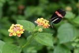 hd-jardin-papillons-25-86