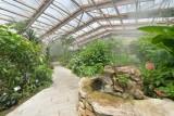 hd-jardin-papillons-4-83