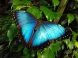 jardin-papillons-2-45