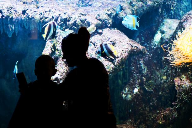 aquarium-2bis-44