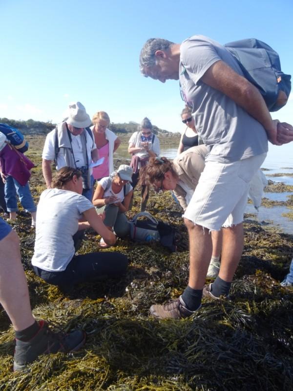 saint-gildas-de-rhuys-decouverte-des-algues-47